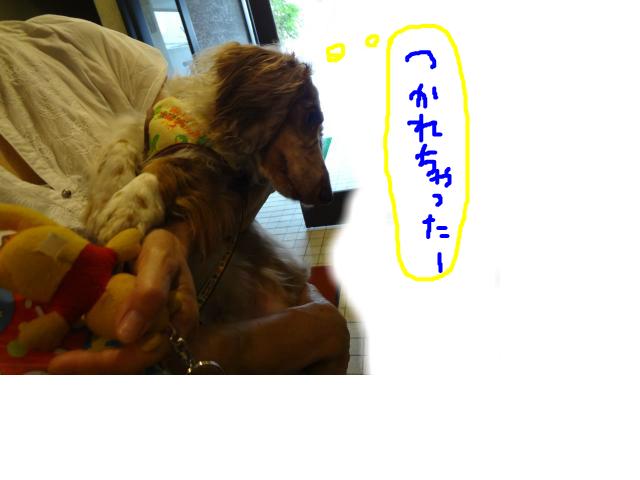 snap_chapuco_201284221843.jpg