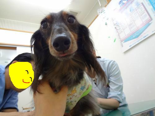 snap_chapuco_201296192756.jpg
