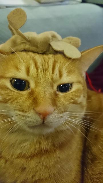 うるうるな猫2