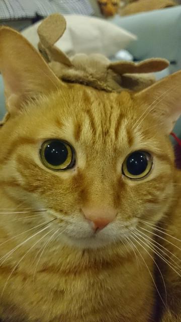 うるうるな猫1