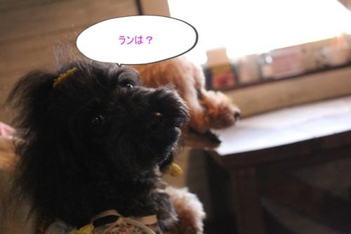 IMG_7063_20120726211425.jpg
