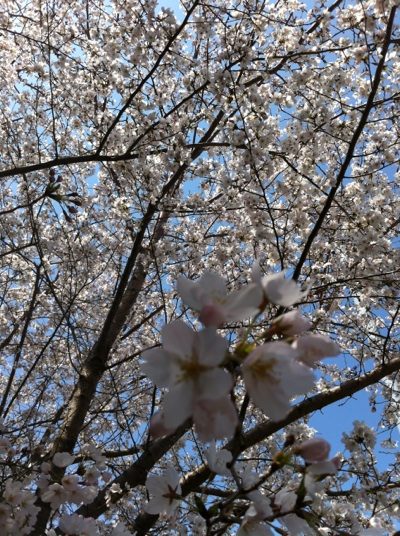 fc2blog_201204102035156fa.jpg