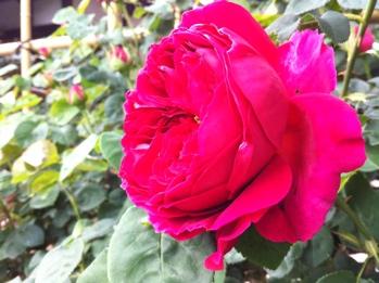 fc2blog_2012051619242753b.jpg
