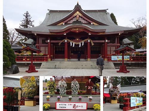 笠間稲荷&菊