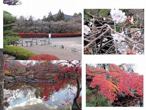桜山公園コラボ