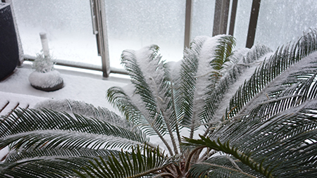 2014雪1