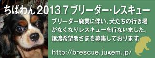 2013BR_320x120_2.jpg
