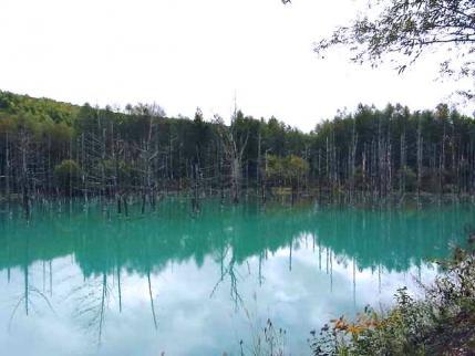 12-10-13-2 美瑛青い池3