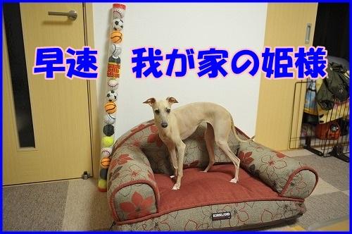 DSC_006.jpg