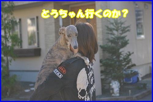 DSC_0334_201309302316306df.jpg