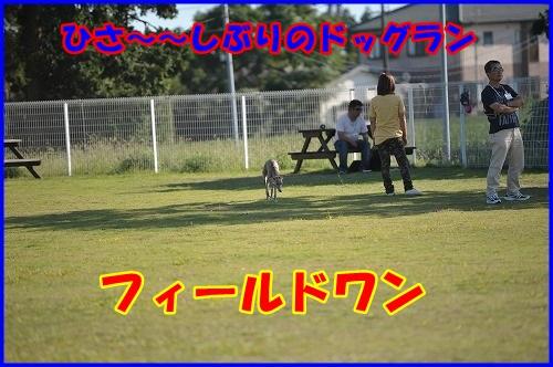 DSC_0346_20131002214110946.jpg