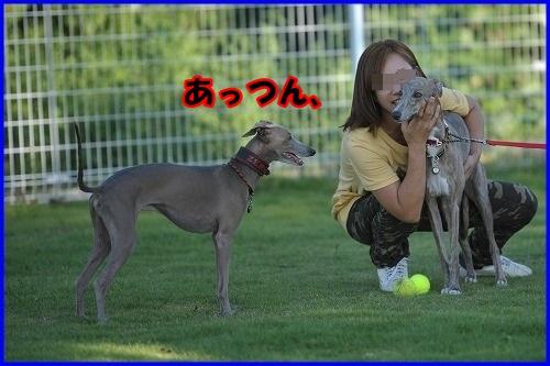 DSC_0360_2013100221414852e.jpg