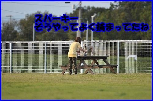 DSC_0380_20131002214232d07.jpg
