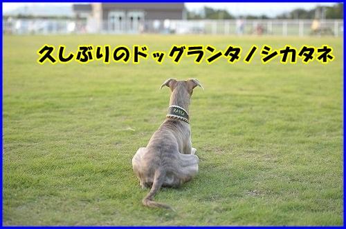 DSC_0381_2013100221423247a.jpg