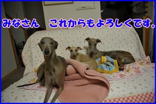 DSC_0432_20131008021412327.jpg