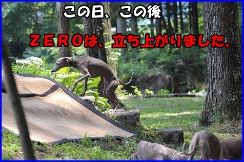 DSC_9891_20130826225958314.jpg