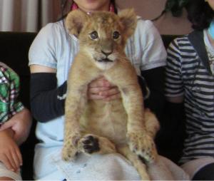 ライオン赤ちゃん抱っこ