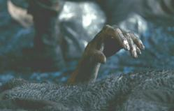 汚れた毛布から飛び出している遺体の手