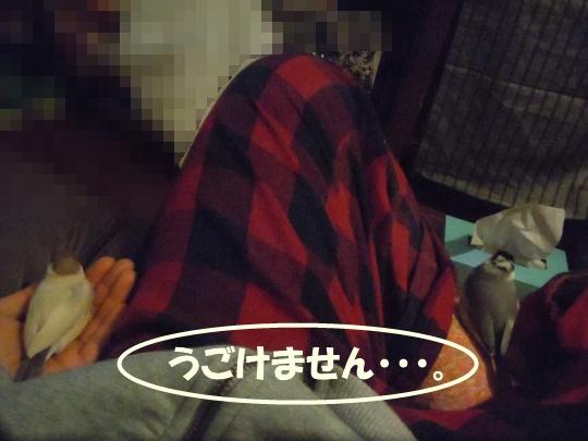 DSCN1083_20120417003610.jpg