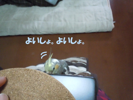 DSCN2481_20120504232924.jpg