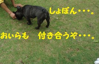 DSC02605_convert_20130331221614.jpg
