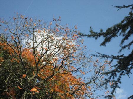 jardin lux ciel