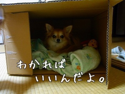 R0013570.jpg