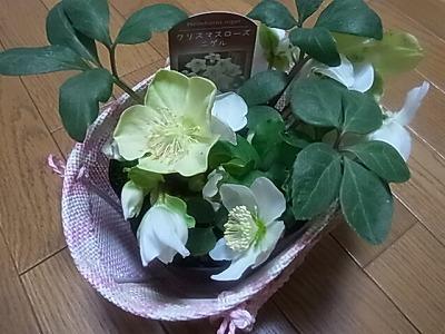 shukusho-RIMG1849.jpg