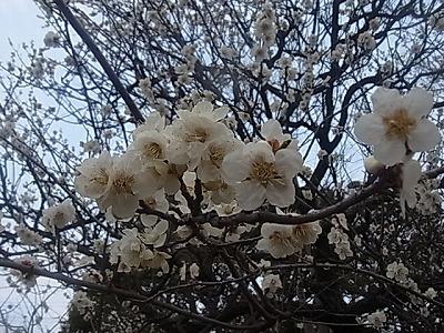 shukusho-RIMG1870.jpg