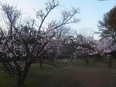 shukusho-RIMG1881.jpg