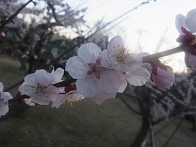 shukusho-RIMG1882.jpg