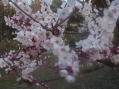 shukusho-RIMG1884.jpg