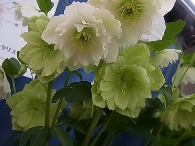 shukusho-RIMG1900.jpg