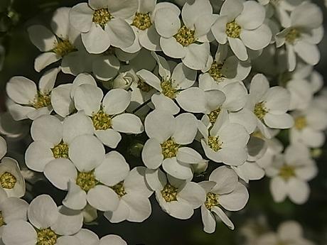 shukusho-RIMG1939.jpg