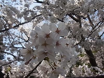 shukusho-RIMG2063.jpg