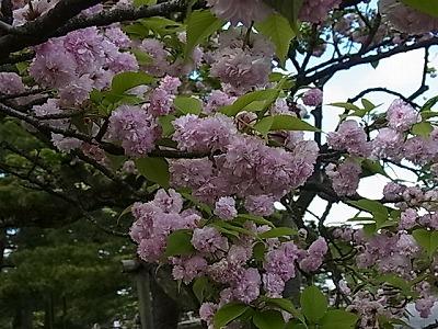 shukusho-RIMG2280.jpg