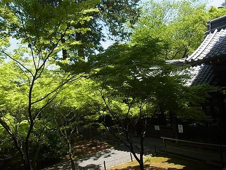 shukusho-RIMG2436.jpg