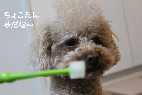 歯ブラシ5