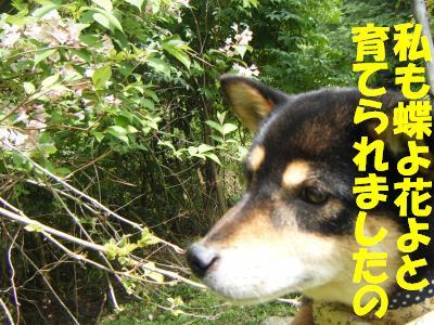 tunekami8_20120623204350.jpg