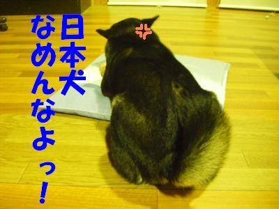wakayama16_20120320144533.jpg