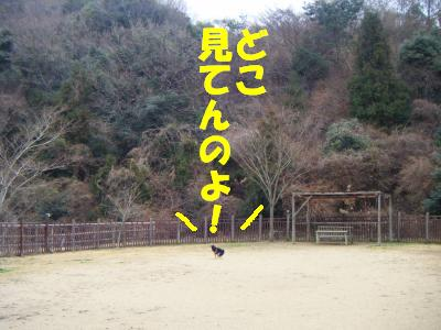 wakayama22.jpg