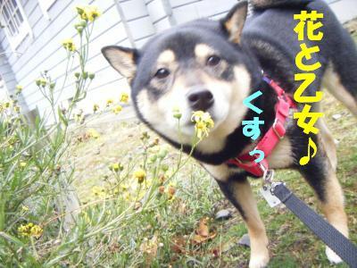 wakayama27_20120325170113.jpg