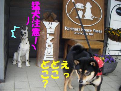 wakayama28.jpg