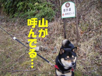 wakayama33.jpg
