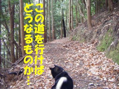 wakayama35.jpg