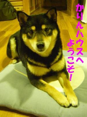 wakayama43_convert_20120320143534.jpg