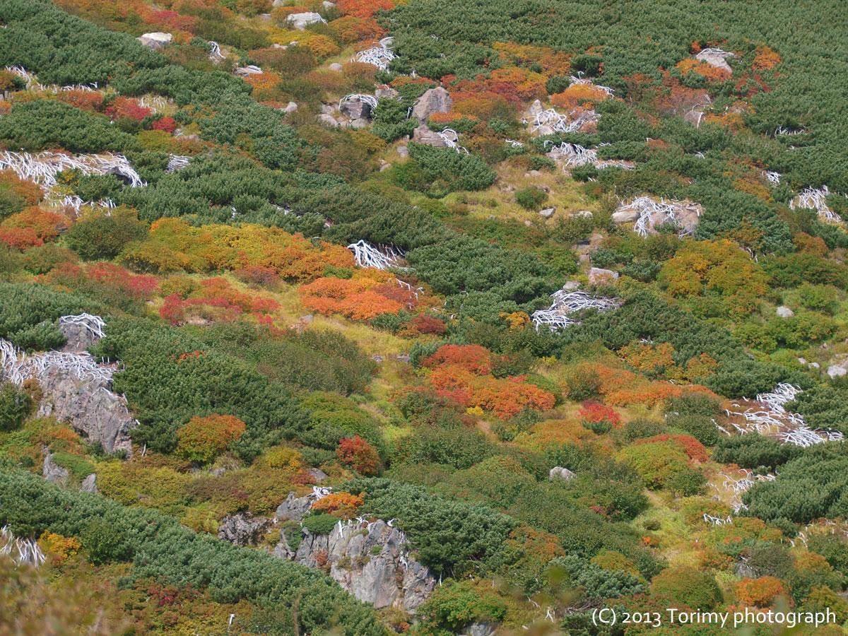 御嶽山紅葉