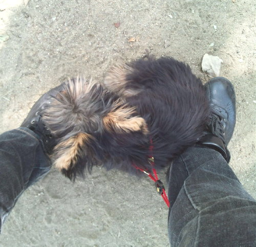 私の足下で休憩