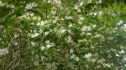 白い山の花3
