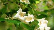 白い山の花4